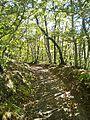 Le Cavallaie-paesaggio 48.jpg