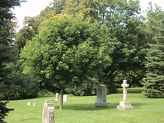 Stephen Leacock - Leacock's grave in the shade of a young tree. Buried in the churchyard in Sibbald's Point.