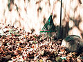 Leaf rake and autumn leaves 2.jpg