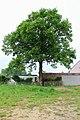 Lede Wanzele Nonnenbosstraat 124 Zomereik als hoekboom (1) - 276220 - onroerenderfgoed.jpg