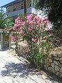Lefkada, Greece - panoramio (8).jpg
