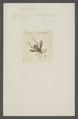 Leptoscelis - Print - Iconographia Zoologica - Special Collections University of Amsterdam - UBAINV0274 040 05 0016.tif
