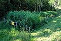 Liebenfels Zojach Pflanzenklaeranlage 25072007 02.jpg