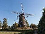 Lieshout, windmolen de Leest RM25888 foto6 2016-10-16 11.24.jpg