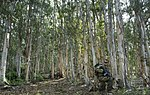 Lightning Academy transitions Joint Force from Desert to Jungle 160322-F-AD344-164.jpg