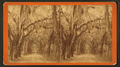 Live Oak Avenue in Bonaventure, from Robert N. Dennis collection of stereoscopic views 4.png