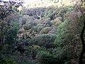 Llanychllwydog church through the trees - geograph.org.uk - 1550605.jpg