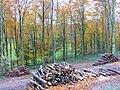 Logging in beech wood - geograph.org.uk - 1056491.jpg