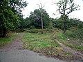 Long Lane Woods, Croydon - geograph.org.uk - 34343.jpg