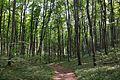 Lvivskyi Reserve RB.jpg