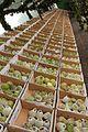 Madeira - Faial - Anona (Custard Apple) festival (33605146766).jpg