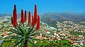 Madeira 23 2014.jpg