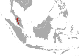 Malayan Water Shrew area.png