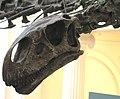 Mamenchisaurus hochuanensis sauropod dinosaur (Shangshaximiao Formation, Upper Jurassic; Gushushan, NW of Hechuan, southwestern Chongqing Municipality, south-central China) 3 (15407361162).jpg