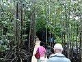 Mandrove Trail at Peam Krasop Wildlife Sanctuary.jpg