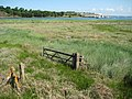 Marshland in the Torridge estuary - geograph.org.uk - 1355608.jpg