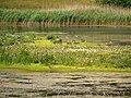 Meadow Lake, Brockholes Nature Reserve (geograph 4544672).jpg