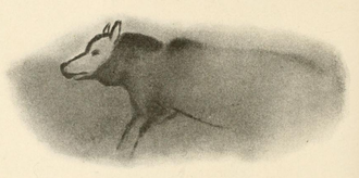 Paleolithic dog - Polychrome tracing made by the archaeologist Henri Breuil from the cave painting of a wolf-like canid discovered in the Font-de-Gaume cave, Dordogne, France dated to 17,000 years ago.