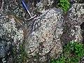 Metamorphosed pillow basalt (Ely Greenstone, Neoarchean, ~2.722 Ga; large glacial erratic along Main Street, Ely, Minnesota, USA) 8 (21462644081).jpg