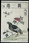 Ming herbal (painting); Chinese jungle mynah Wellcome L0039447.jpg