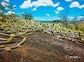 Mirante dos Cactus APP da Lagoa Encantada que faz parte da região dos alagados do Vale Encantado.jpg