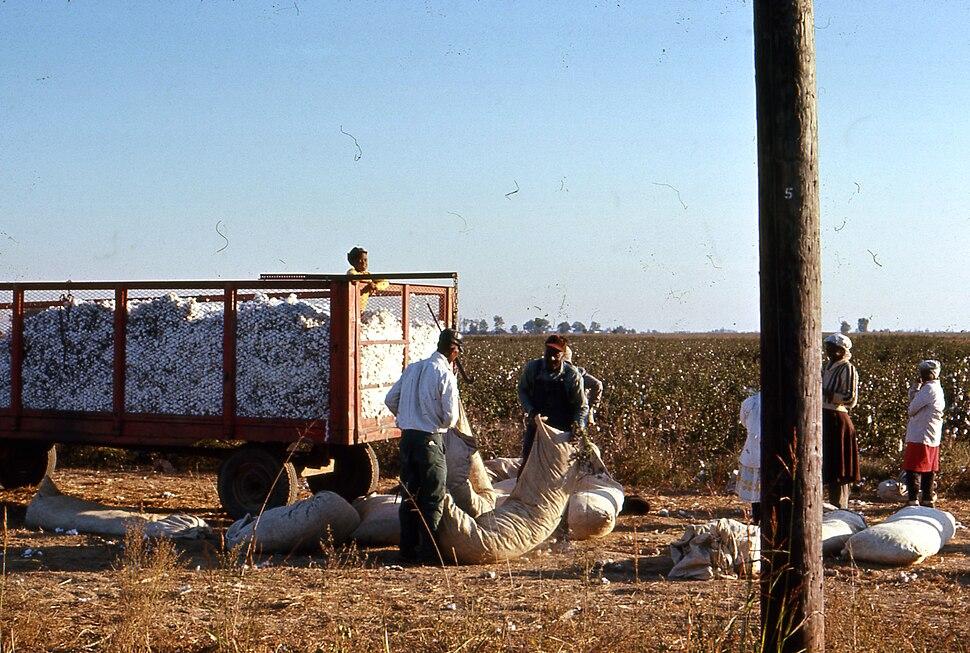Mississippi Delta Cotton Pickers
