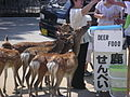 Miyajima tame deer.jpg