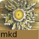 Mkd-256x256.png