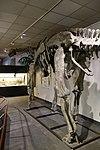 Moabosaurus BYU 4.jpg