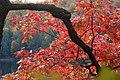 Mock Cherry Blossoms (2920443439).jpg