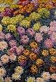 Monet - bed-of-chrysanthemums.jpg