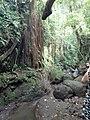 Monkey Forest Ubud - Bali.jpg