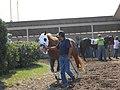 Montana Expo Park Horse Racing 02.JPG