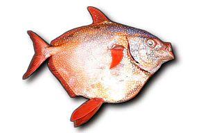 Moonfisch Lampris guttatus