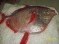 Moonfish caught in Seychelles 2.jpg