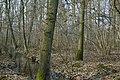 Motte op de Butsberg te Tielt-Winge - 372407 - onroerenderfgoed.jpg
