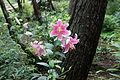 Mount Hakodate Shiga Pref05n.jpg