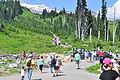 Mount Rainier - Paradise, August 2014 - start of the Skyline Trail 01.jpg