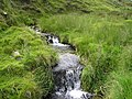 Mountain Stream - geograph.org.uk - 1393043.jpg