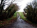 Muddy lanes, Wigginton Bottom - geograph.org.uk - 106845.jpg