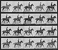 Muybridge, Eadweard - Daisy mit Reiter (2) (Zeno Fotografie).jpg