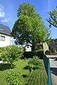 ND Winterlinde (Lutherlinde) in Chemnitz-Klaffenbach..2H1A3248WI.jpg