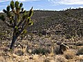 NEVADA DESERT (5528509861).jpg