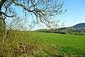 NSG Ithwiesen - Südlicher Teil bei Holzen (5).jpg