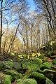 Natural monument Vlčí rokle in winter 2016 (4).JPG