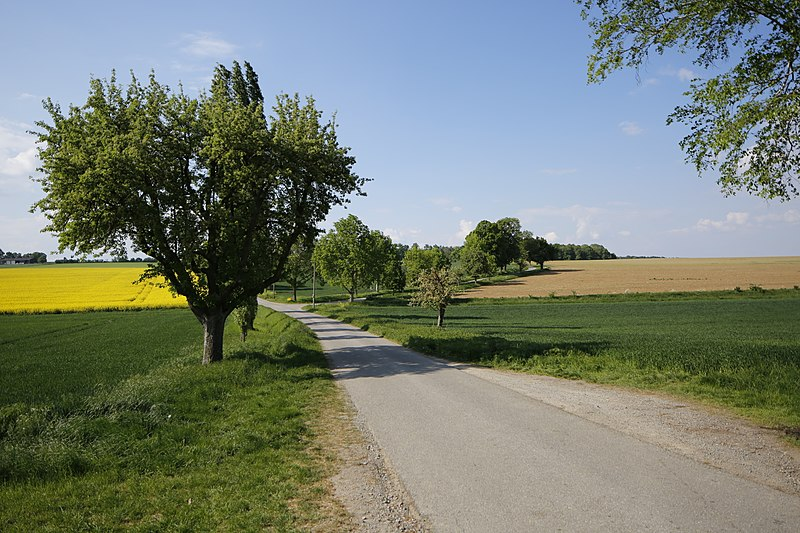 File:Naturdenkmal Obstbaum- und Lindenallee am Dreispitz, Kennung 81150530016, Jettingen-Sindlingen 05.jpg