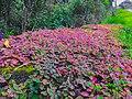 Nature Colors.jpg