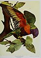 Nature neighbors, embracing birds, plants, animals, minerals, in natural colors by color photography, containing articles by Gerald Alan Abbott, Dr. Albert Schneider, William Kerr Higley...and other (14728908336).jpg
