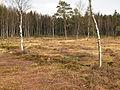 Naturpark Heidenreichsteiner Moor 2009-04 2.jpg