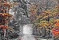 Nebelwaldweg - Sascha Grosser - yvs2 f1024er col extr1.jpg